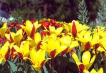 Spring Time at Mainau