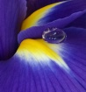 Water Droplet on ...