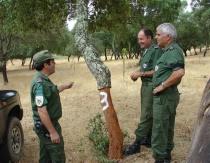 Florestas 1