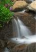 Wildflower Cascad...
