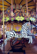 A Handsome Seat On The Carousel