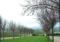 Orchard & Vinyards (horizontal)