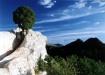 Juniper in Rocks