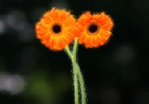 Sparkley Flowers