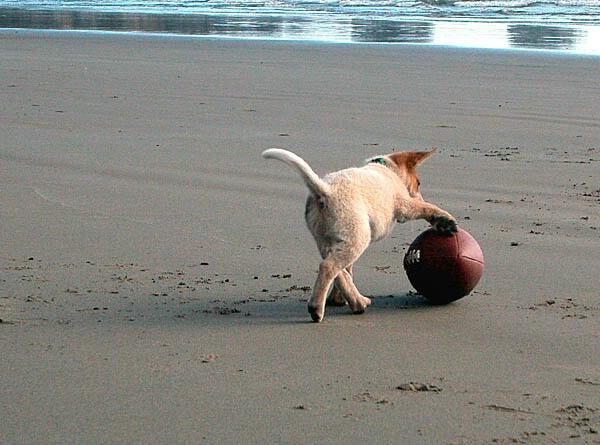 Puppy Football