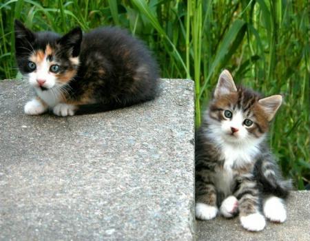 Kitten Two Step