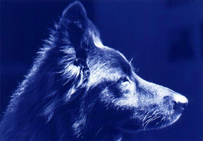 """""""Blue"""" DOG"""