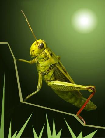 Adobe Grasshopper