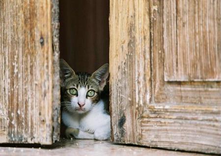 Curious Cat 2