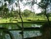 Green Paddy Field