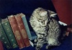 Books. Cats. Life...