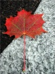 Maple Leaf II