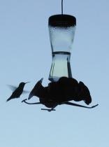 silhouette of a hummingbird