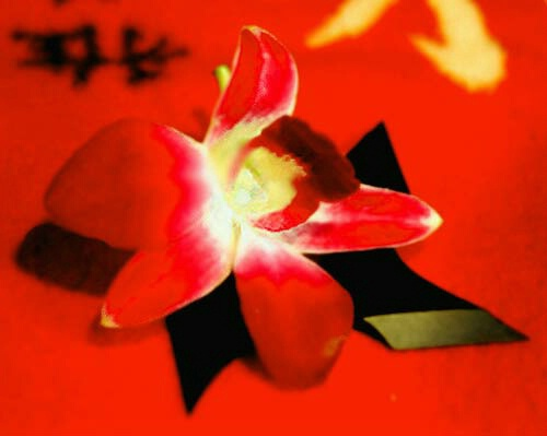 japanese flower and metal