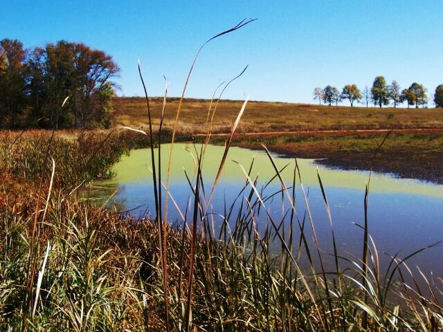 Beauty in the Marsh, Horicon Wisconsin