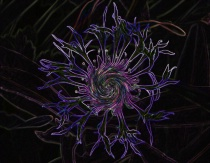 Electric Cornflower