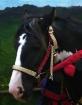 Renaissance Horse...