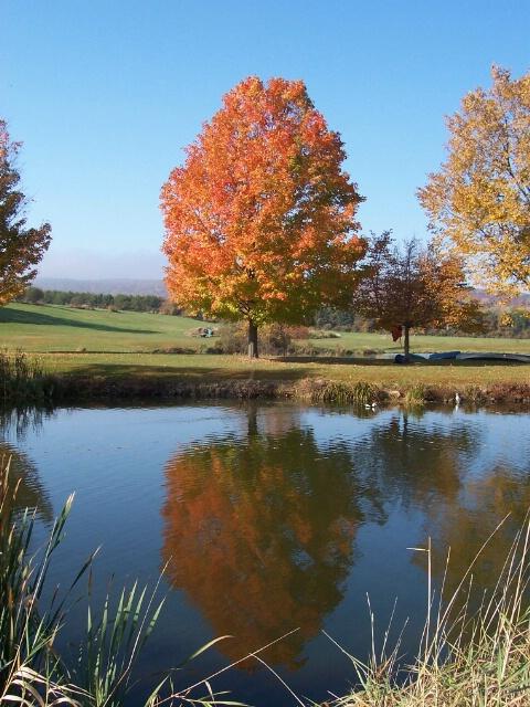 Sweet Fall Reflection