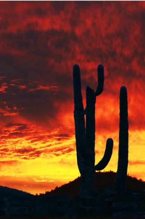 Saguro Sunset
