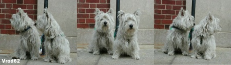 Bronxville Pooches