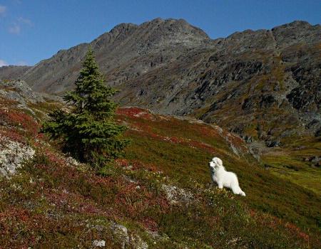 Spotting the Spruce