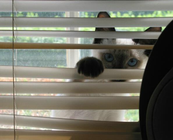 A Peeping Tom
