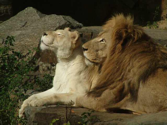 The King and Queens of Beasts