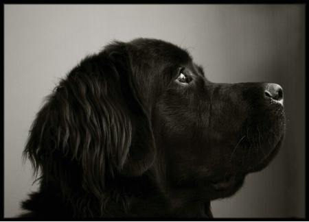 The Newfie