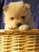 Puppy V1.0