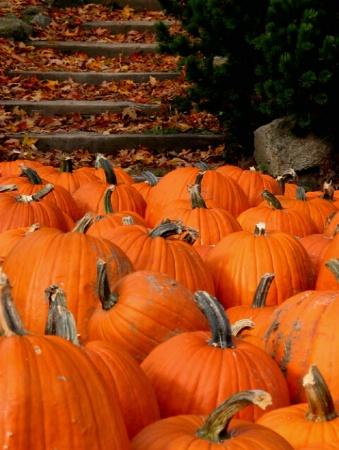 Pumpkin Pathway