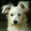 My Dog Cooper