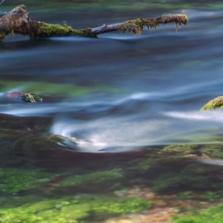 Blue Springs N.P.