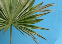 palm against the blue wall