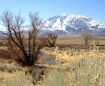 Mt. Tom Winter