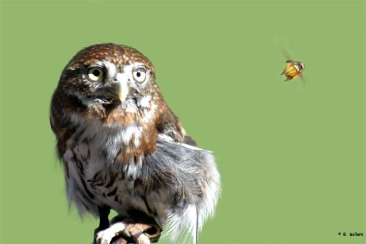 Owl & Insect