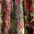 © Kurt Kettelhut PhotoID # 223823: Everglades Cypress Hammock