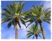 Fall in Palm Spri...