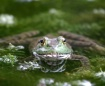 Nose Drip Frog