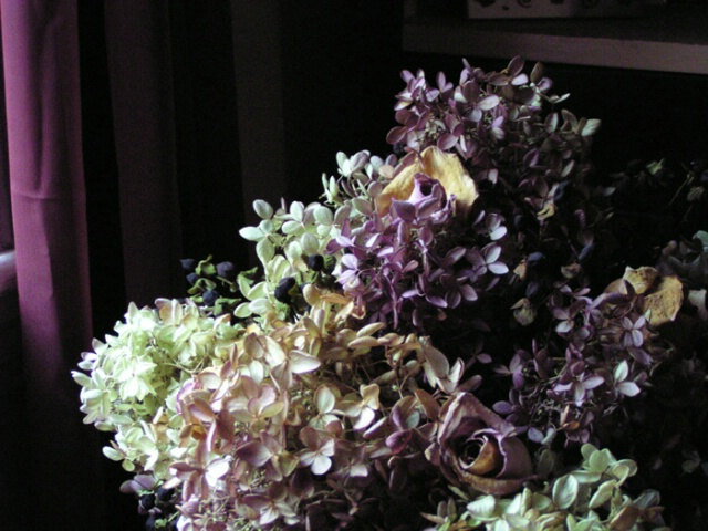 Hydrangeas near the window