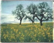 Trees and Mustard