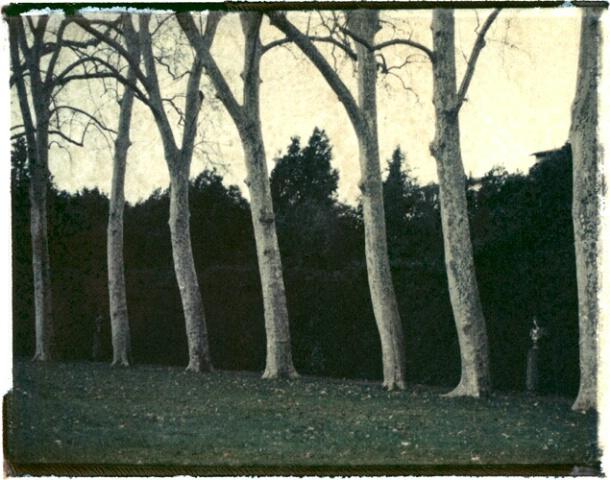 Trees, Boboli Gardens, Florence