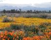 California Spring...