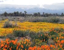 California Springtime Calendar - Sun and Snow