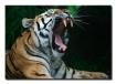 Great yawn