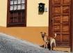 Doghouse