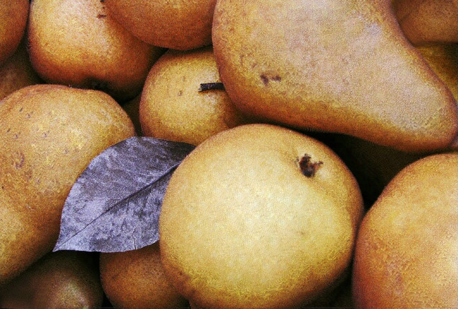 Farmstand Pears