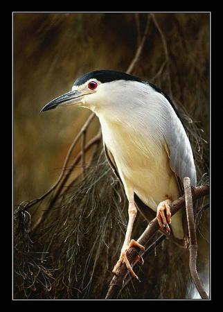 Simply birdy