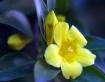 Tiny yellow flowe...