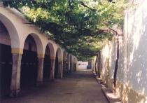 Spanish Arbor