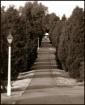 The Long Road Hom...